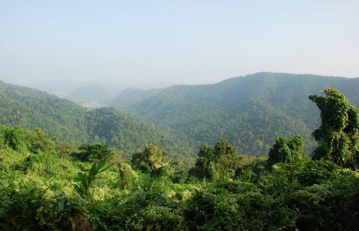 Rainforest tropics national park Khao Yai