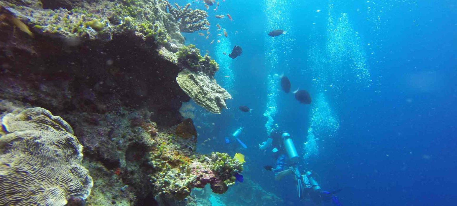 dive in Borneo