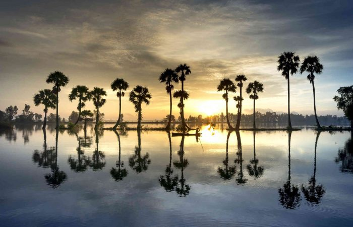 Scenery Palm Tree Vietnam